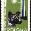 First dog Laika in space on post stamp — Stock Photo