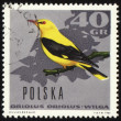 Oriole on post stamp - Stock Photo