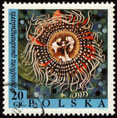 Passion flower on post stamp — Stock Photo