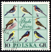 Forest birds on post stamp — Stock Photo