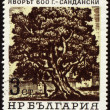 Old 600-years tree in Sandanski on post stamp - Stock Photo