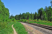 Railroad track in forest — Stock Photo