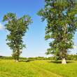 Country summer landscape with meadow and old big trees — Stok fotoğraf