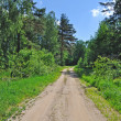 Country road in forest — Foto Stock