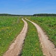 Country dirt road in the meadow — Stock Photo