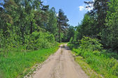 Country road in forest — Stok fotoğraf