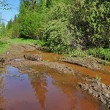 Mud puddle on a forest road — Stock Photo