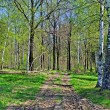 Country dirt road in forest — Foto Stock