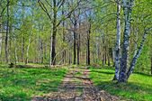 Country dirt road in forest — Stock Photo
