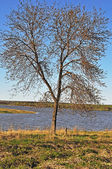 Tree at riverbank — Stock Photo