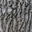 Rough oak bark background - Stock Photo