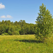 Sunny summer forest glade — Stock Photo