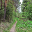 Narrow foot way in forest — Stock Photo