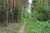 Narrow foot way in forest — Stockfoto