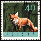 Red fox on post stamp — Stock Photo