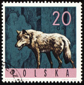 Wolf on post stamp — Stock Photo