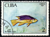 Poisson bodianus rufus sur timbre postal — Photo