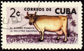 Cow on post stamp — Stock Photo