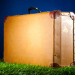 Royalty-Free Stock Photo: Suitcase on grass