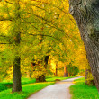 Autumn park — Stock Photo #6088365