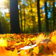 Foto de Stock  : Autumn leaves