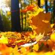 Autumn leaves — Photo #6088445