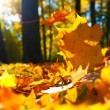 Autumn leaves - Stok fotoraf