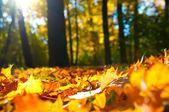 Podzimní listí — Stock fotografie