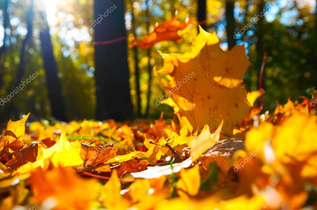 Macro photo of a fallen leaves in autumn forest, shallow dof — Stock Photo #6088445