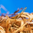 Needle in a haystack — Stock Photo #5799529