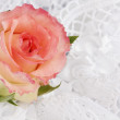 Stock Photo: White silk with a lace and rose