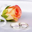 Beautiful rose and wedding rings — Stok fotoğraf