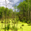 Colourful bog in a thicket — Stock Photo