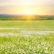 Big field of flowers on sunrise. — Stock Photo #6435317