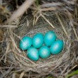 Eggs in a nest. — Stock Photo #6435383