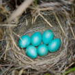 Stock Photo: Eggs in nest.
