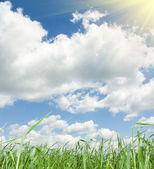 Lato zielony łąka. — Zdjęcie stockowe