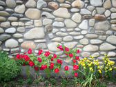 Flowers against to ancient wall — Stock Photo