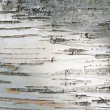Close up of birch bark surface texture — Stock Photo