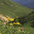 Yellow flowers on hillside — Stock Photo