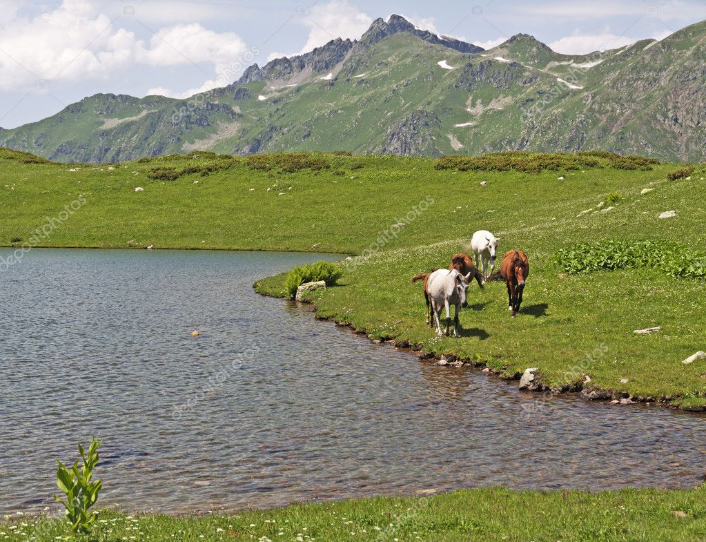 Horses on mountain lake shore in sunny summer day — Stock Photo #6323154