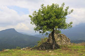 Lonely tree and ruins on mountin — Stock Photo