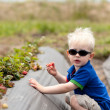 Toddler picking strawberries — Stock Photo