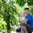 Father and son picking plums — Stock Photo