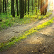 Stock Photo: Road in woods