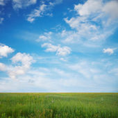 Sky and fields — Stock Photo