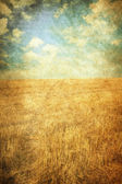 In the fields — Stock Photo