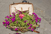 Old suitcase with flowers — Stock Photo