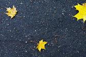 Hojas amarillas en asfalto mojado — Foto de Stock