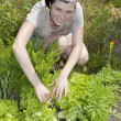 Stock Photo: Smiling gardener in vegetable garden.